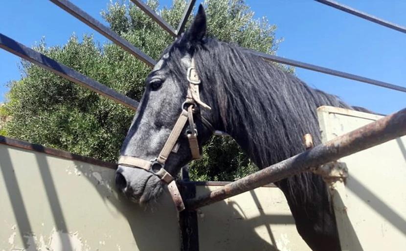 Κρήτη Σάλος με κακοποίηση αλόγου – Πρόστιμο 30000 ευρώ σε